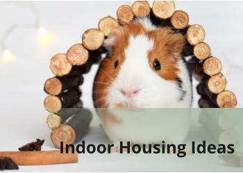 Indoor Housing Ideas